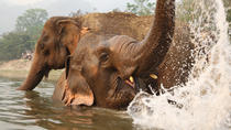 Full-Day Baan Cheng Elephant Park Experience from Chiang Mai, Chiang Mai, Eco Tours