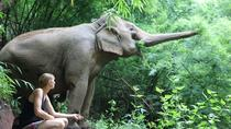 Full-Day Elephant and Sustainability Tour in Chiang Mai, Chiang Mai, Full-day Tours