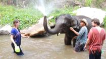Full-Day Ran-Tong Elephant Park Experience from Chiang Mai, Chiang Mai, Day Trips