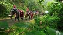 Half-Day Patara Elephant Farm Experience from Chiang Mai, Chiang Mai, Nature & Wildlife