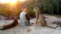Cheetah Walk and Wild Cat Experience, Garden Route, Nature & Wildlife