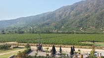 Premium Wineries: Casablanca, Colchagua or Maipo Valleys , Santiago, Wine Tasting & Winery Tours