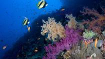 Introductory Dive in Eilat, Eilat