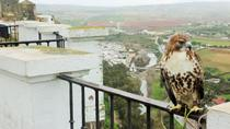White Villages Tour from Seville with Optional Visit to Ronda and Olive Oil Tasting, Seville, Day...