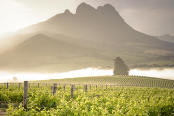 Stellenbosch Tours, Travel & Activities