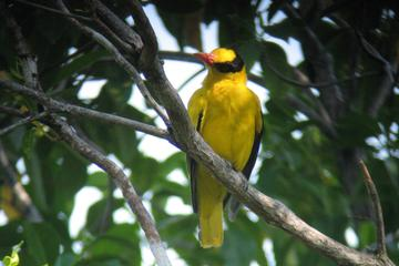 2-Day Birdwatching Tour from Langkawi