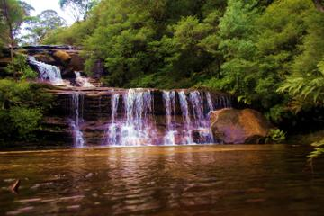 Blue Mountains Private & Custom Tours