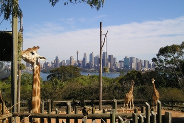Tour australian animals und sky safari im taronga zoo in sydney