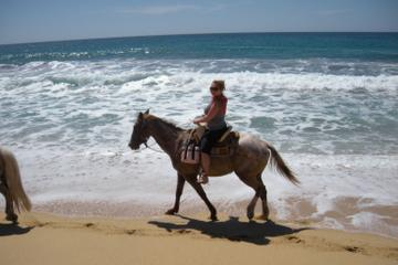 Los Cabos Shore Excursion: Horseback Riding Adventure