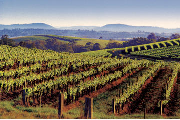 2-Day Hunter Valley Wine Tasting Tour with Overnight at Hunters Resort