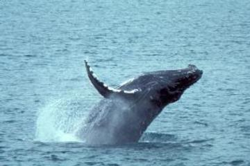 St. Lucia Dolphin & Whale Watching