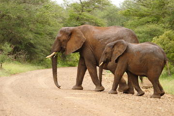 Kruger National Park Tours, Travel & Activities