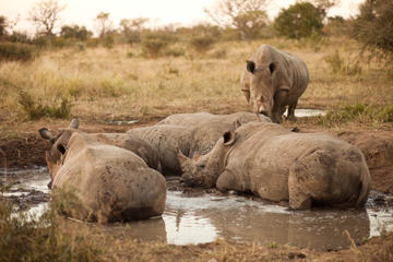 Full-Day Big Five Game Drive in Kruger National Park