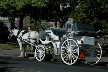Beacon Hill Park Carriage Tour