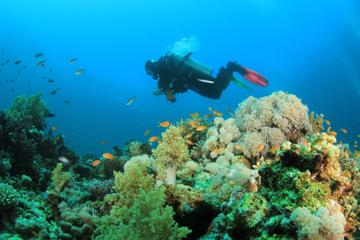 Dedicated Dives for Certified Divers from Puerto Vallarta