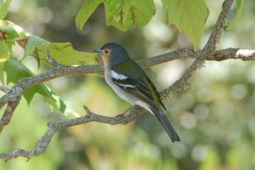Half Day Fauna and Flora Tour to Laurel Forest - Birdwatching and Hiking