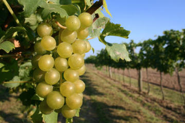 Christchurch Wine Tasting & Winery Tours