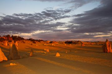 Pinnacles Desert, New Norcia and Wildflowers Day Tour from Perth