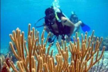 Cozumel Shore Excursion: PADI Certified Scuba Diving