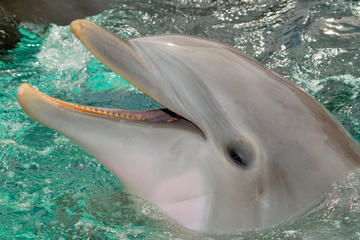 Best St Augustine and Dolphin Experience Day Trip from Orlando