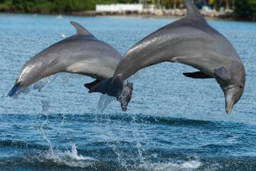 Jamaica Bay Combo Tour: Dolphin Cove and Negril Sunset Cruise from Montego Bay