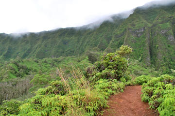 Oahu Shore Excursion: Rainforest Hiking Adventure