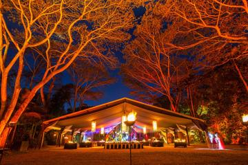Cairns Flames of the Forest Dining Experience