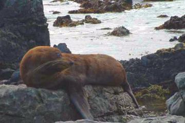 Wellington South Coast Seals Small-Group Tour
