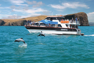 Akaroa Harbour Nature Cruise