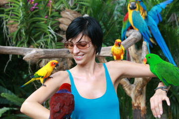 Private Tour: Singapore's Jurong Bird Park Tour