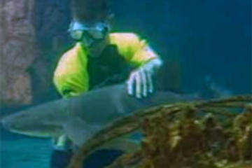 Shark and Stingray Encounter at Ocean World