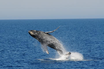 Best Whale-Watching Cruise and Fremantle Day Trip from Perth