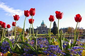 2-Day Victoria Tour from Vancouver including Butchart Gardens