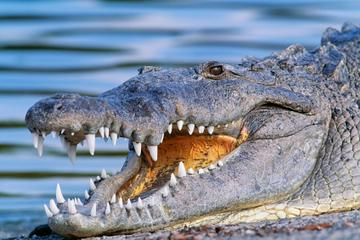 Eco-Adventure in Goa: Crocodile Watching and Bird Spotting with Buffet Lunch