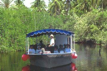 Mazatlan Shore Excursion: Estero Ecological Reserve Jungle Tour