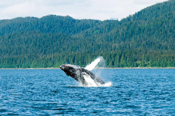 Juneau Shore Excursion: Mendenhall Glacier, Whale Watching and Salmon Bake