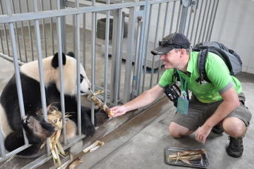 Panda Rescue Center Volunteer for a Day