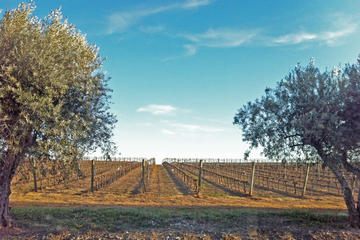 Small-Group Évora Day Trip from Lisbon with Wine Tasting
