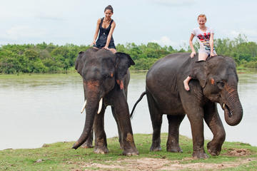 Private Tour: Jungle Adventure from Goa Including Elephant Ride, Lunch and Dinner
