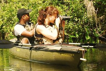 Mangrove Forest Kayak Eco-Tour in Florida Everglades