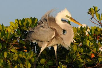 Small-Group Wildlife Boat Tour in Florida Everglades National Park