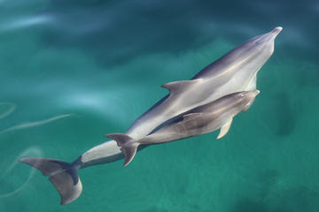 Dolphin Cruise from Adelaide with Optional Dolphin Swim