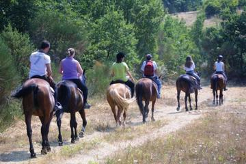 Tuscan Hills Horseback Riding Tour from Siena