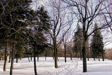 Montreal in Winter: Ice Skating, Snowshoeing and Sledding on Mount Royal