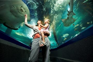 Sunshine Coast UnderWater World Entrance Ticket