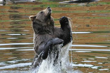 Sitka Super Saver: Whale-Watching Cruise and City Sightseeing Tour