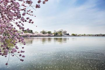 Cherry Blossom Riverboat Cruise on the Potomac