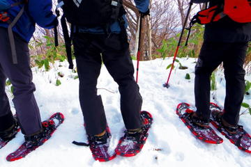 Sapporo Day Trips & Excursions