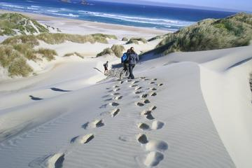 Otago Peninsula  Guided Coastal Walk Including the Chasm and Lover's Leap