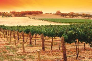 Barossa Valley Wine Tasting & Winery Tours